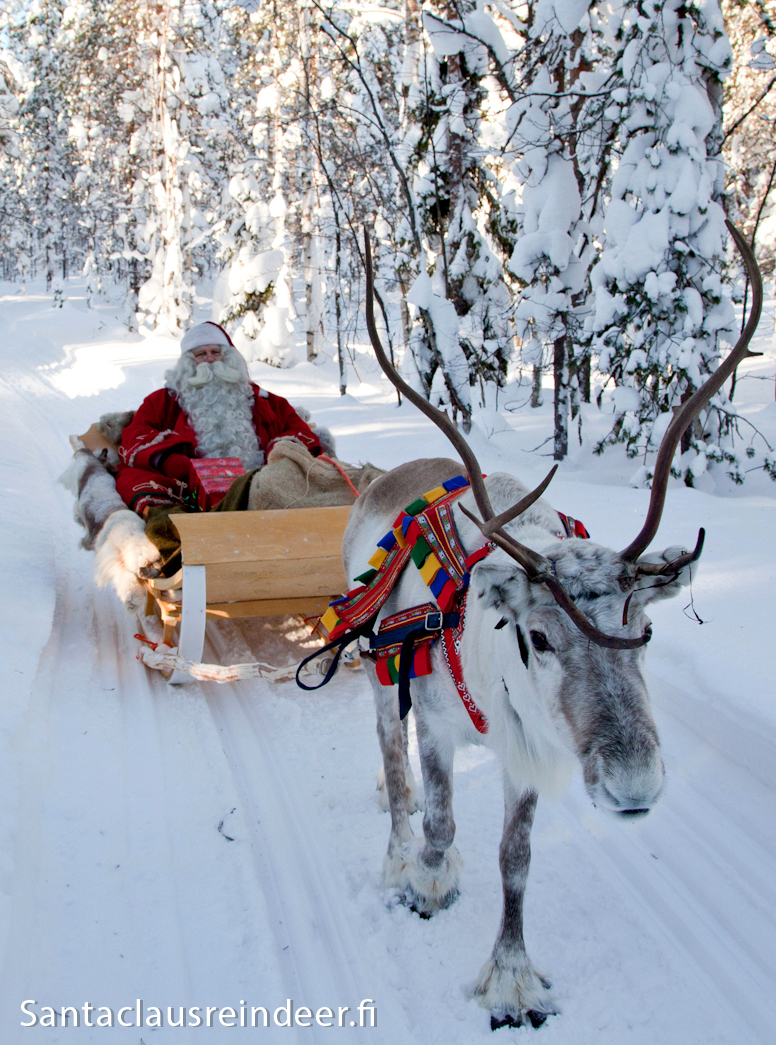 photo santa claus reindeer au cercle polaire rovaniemi en finlande. Black Bedroom Furniture Sets. Home Design Ideas