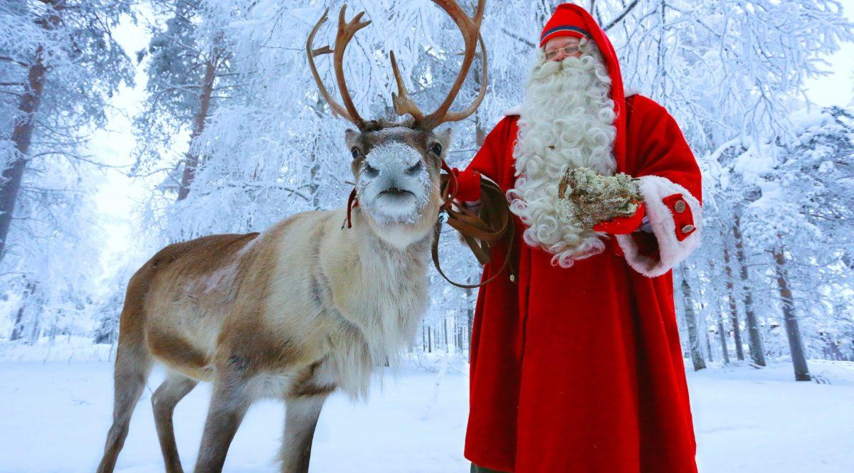 Rovaniemi Lapponia Babbo Natale.Renne Di Babbo Natale Santa Claus Reindeer Escursione