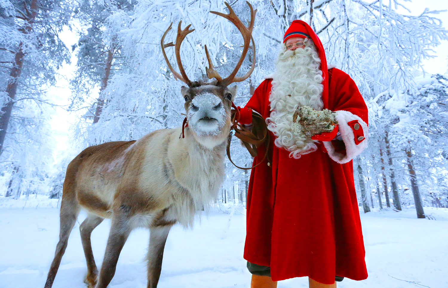 photo santa claus reindeer in santa claus village on arctic circle